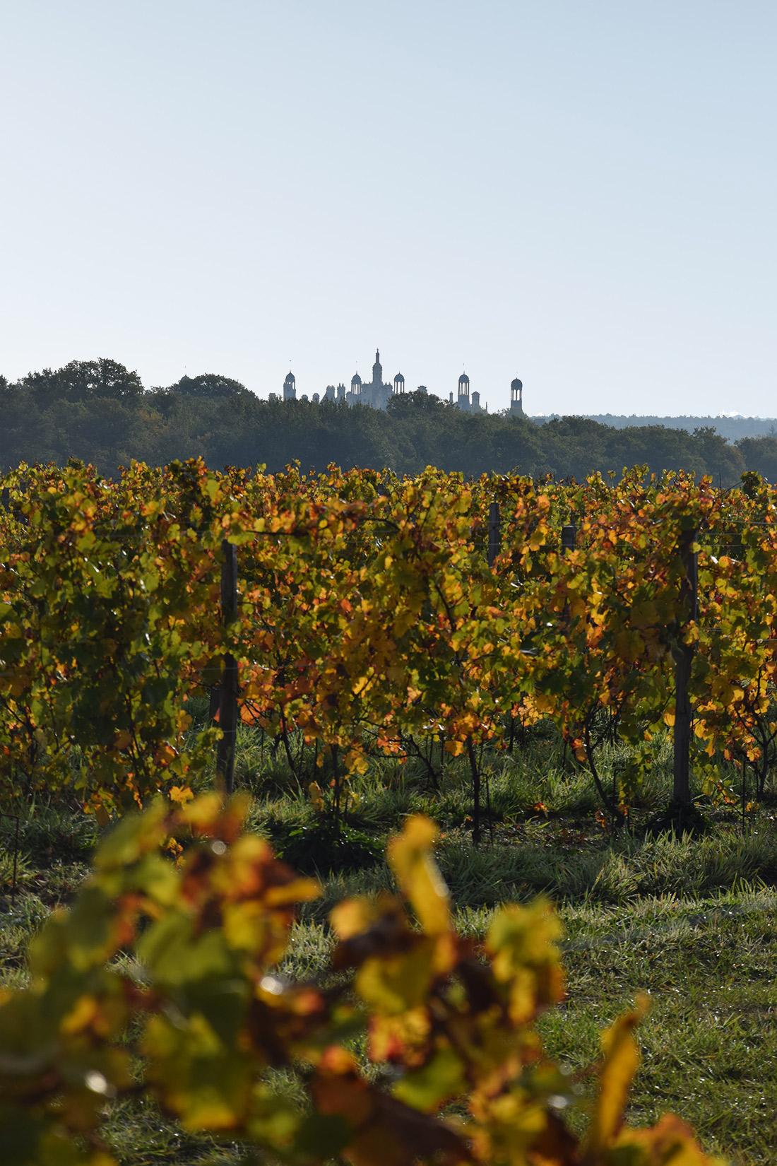 Vineyards in Chambord.